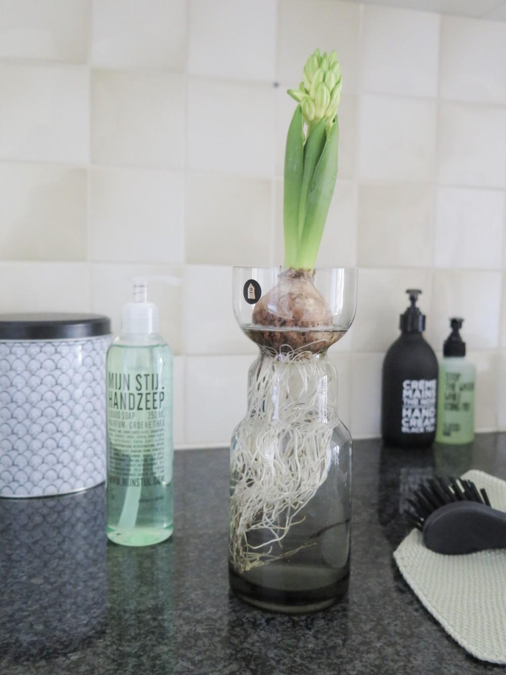 Hyacinth bol op water
